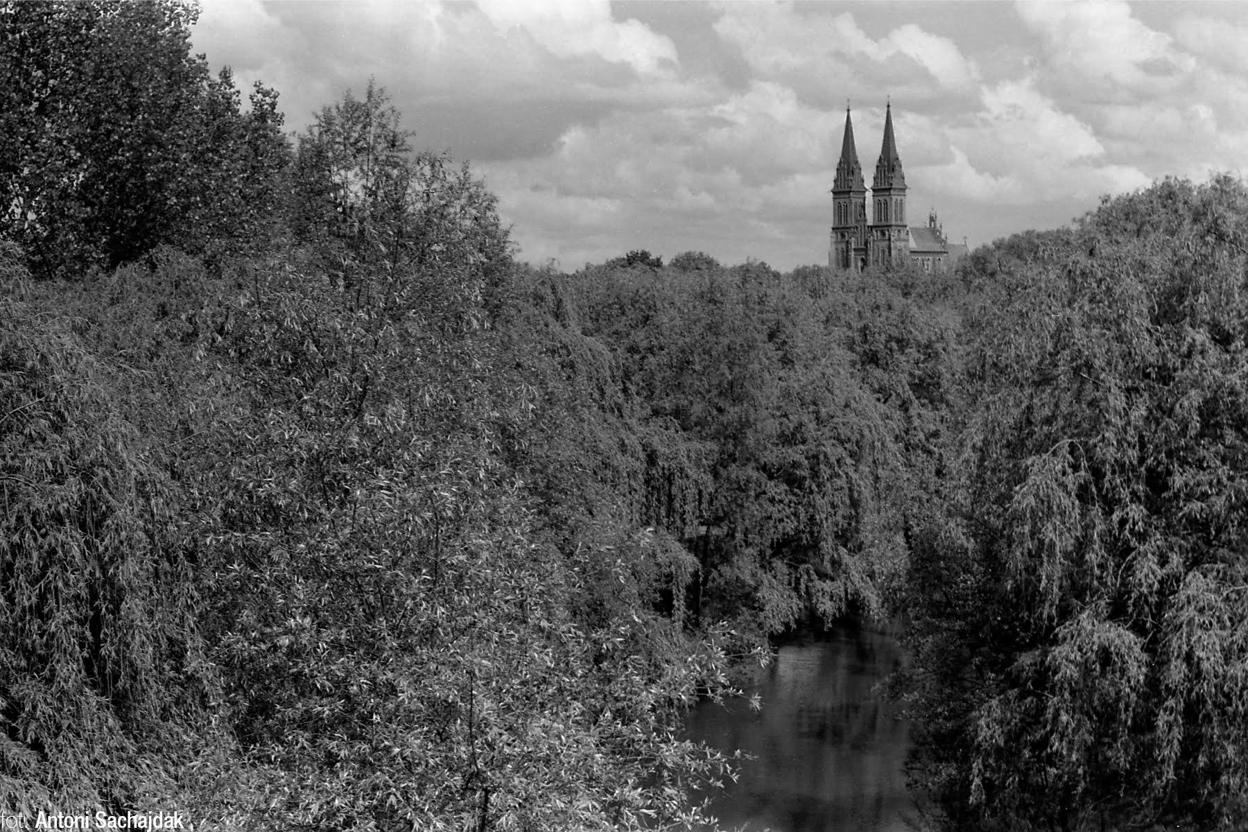 Katedra przez park